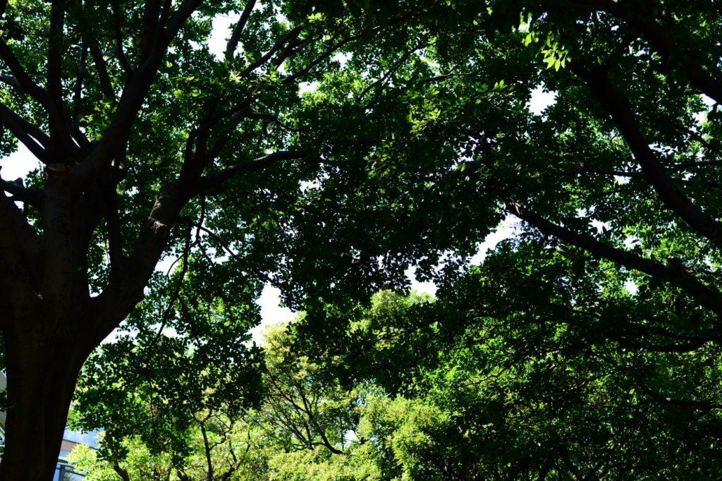 森林浴 横浜